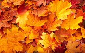 fall-leaves1